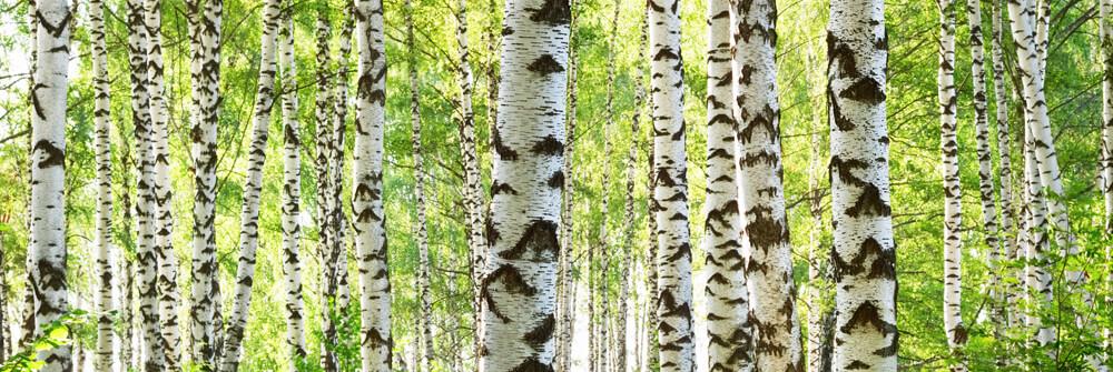 Fotobehang met Bomen