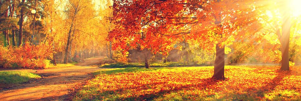 Herfst landschap op fotobehang