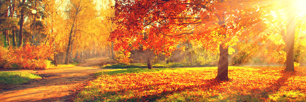 Autumn Photo Wallpaper
