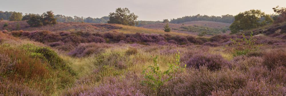 Fotobehang met Lavendel bloemen