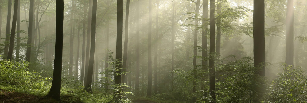 Fotobehang van de natuur