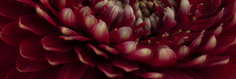 Fotobehang met overige bloemen