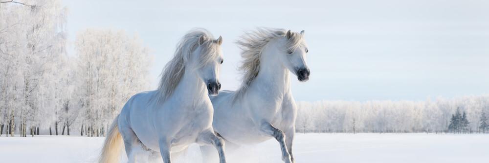 Fotobehang met Paarden