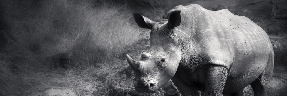 Fotobehang Safaridieren