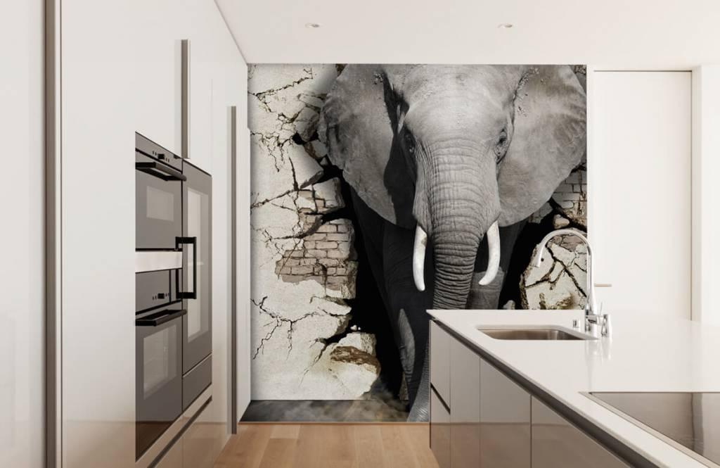 Dieren - 3D Olifant uit de muur - Tienerkamer 1