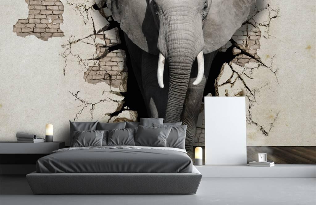 Dieren - 3D Olifant uit de muur - Tienerkamer 2
