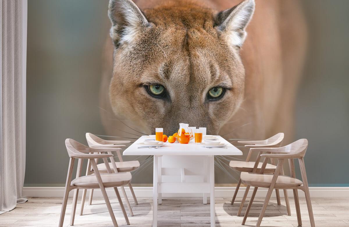 Roofdieren - Puma close-up - Tienerkamer 1