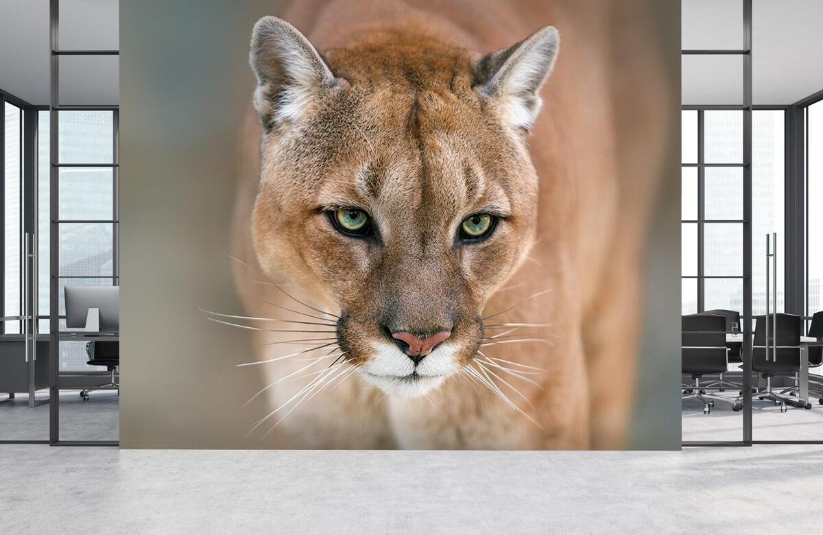Roofdieren - Puma close-up - Tienerkamer 3
