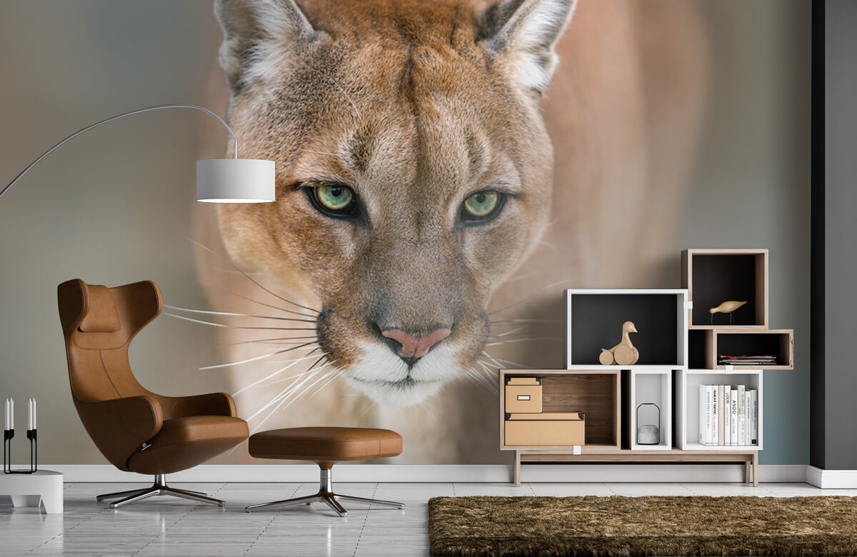 Roofdieren - Puma close-up - Tienerkamer 4