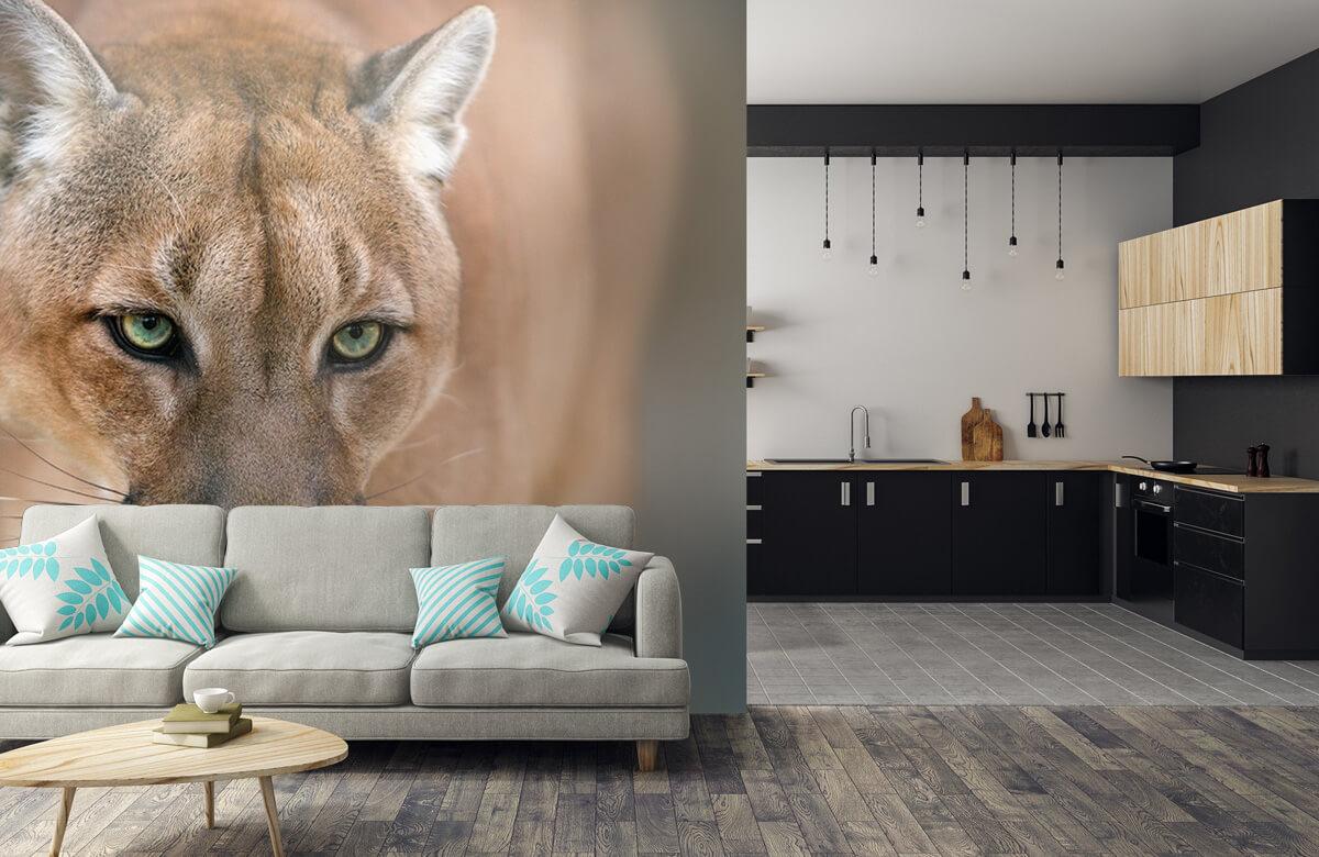 Roofdieren - Puma close-up - Tienerkamer 5