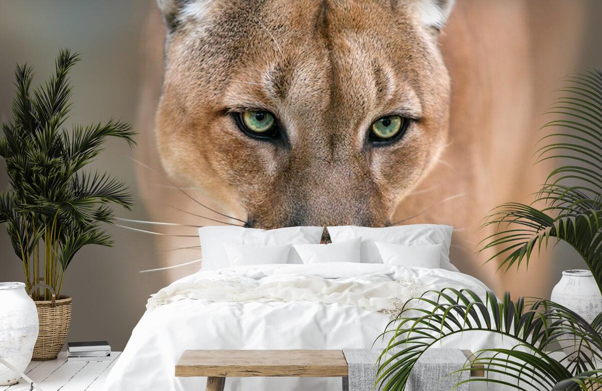 Roofdieren - Puma close-up - Tienerkamer 6