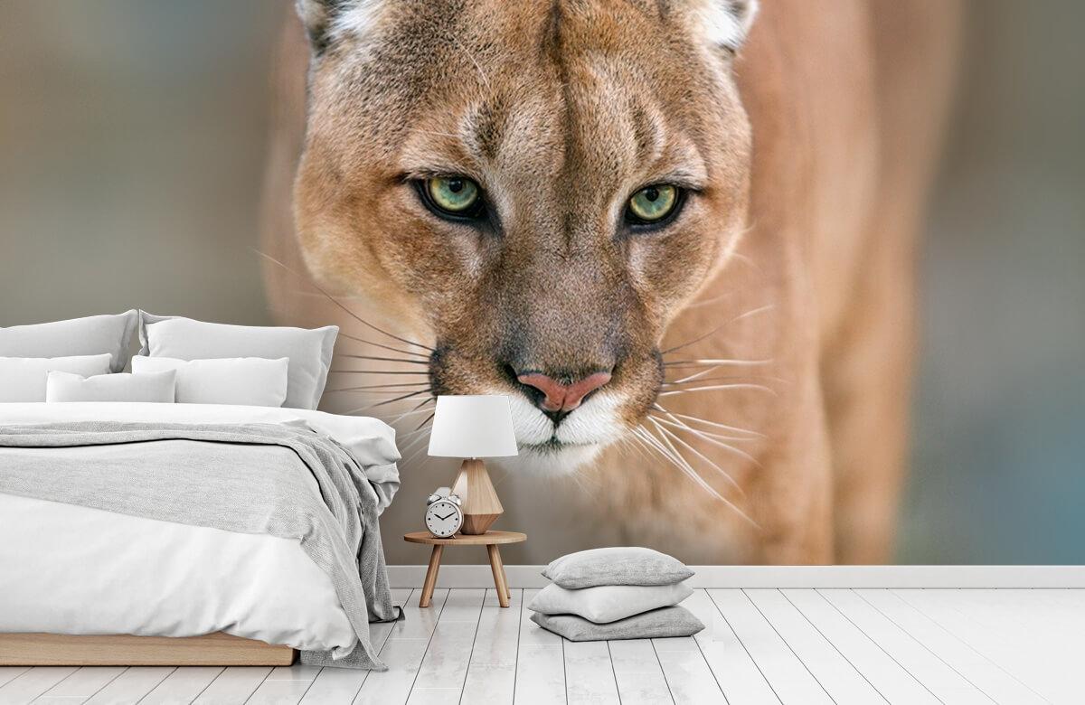 Roofdieren - Puma close-up - Tienerkamer 7