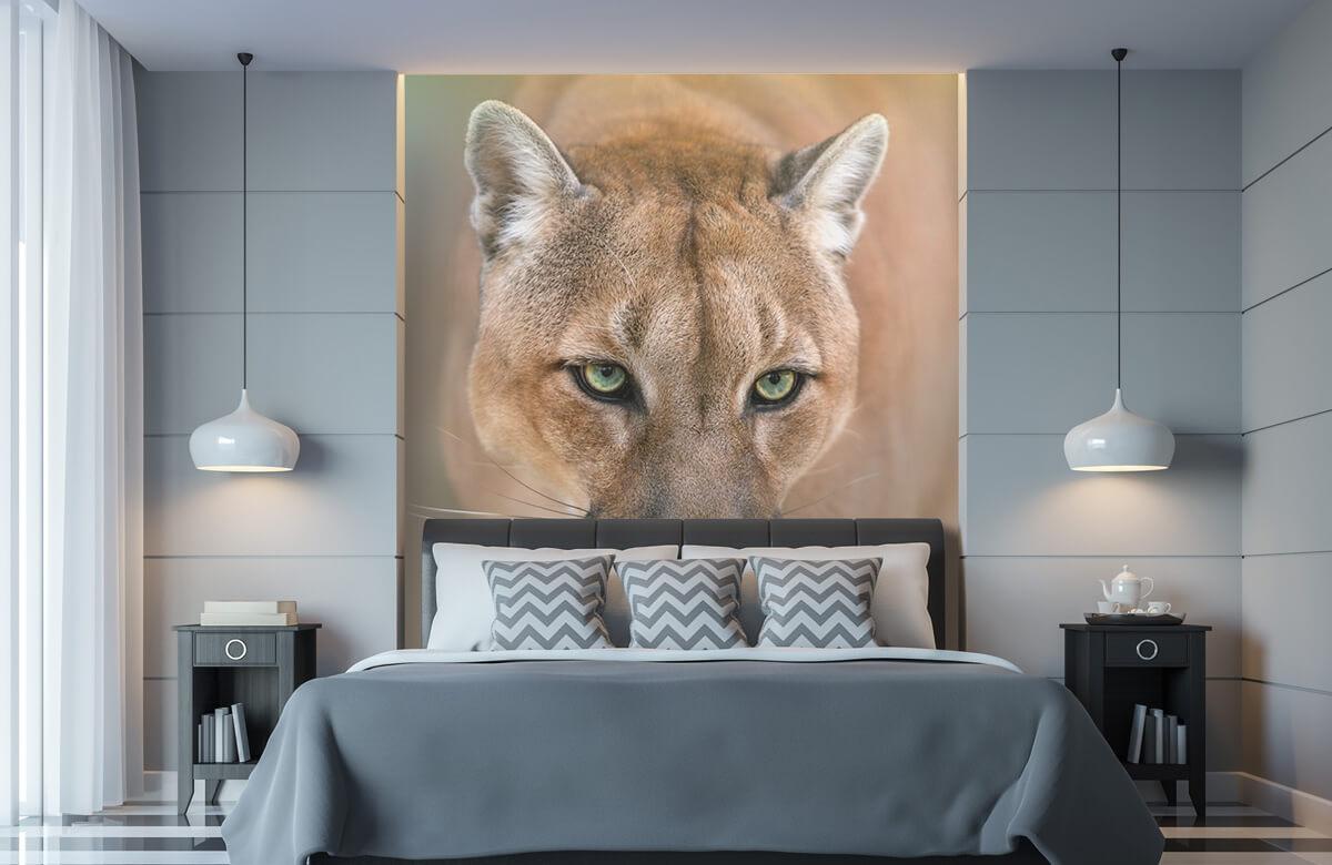 Roofdieren - Puma close-up - Tienerkamer 8