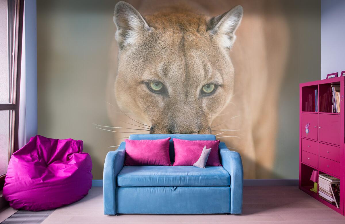 Roofdieren - Puma close-up - Tienerkamer 10