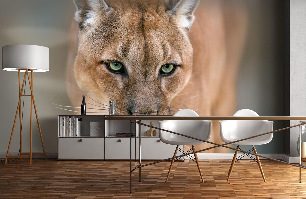 Roofdieren - Puma close-up - Tienerkamer 11