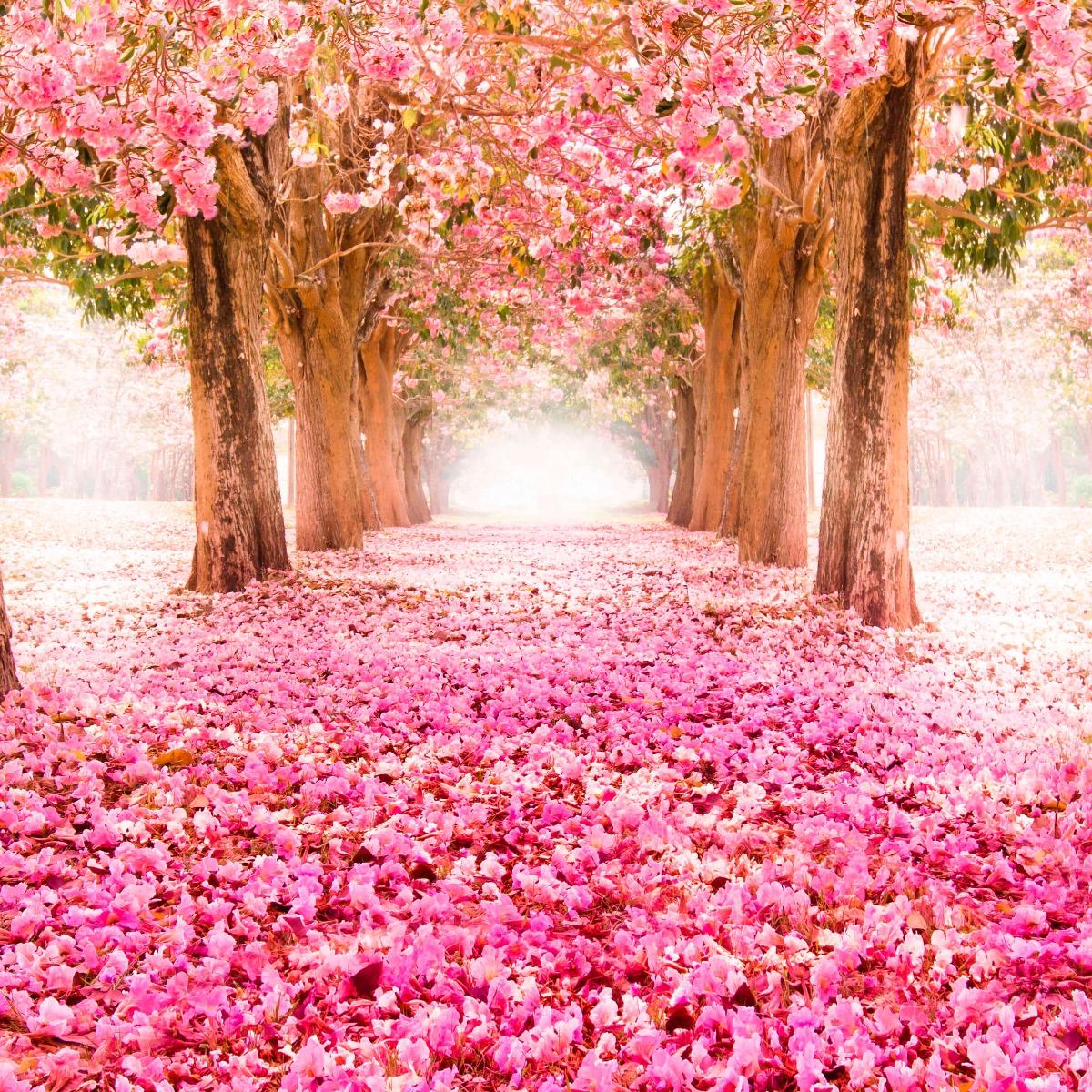 Bloemen, planten en bomen Fotobehang bloesem 12