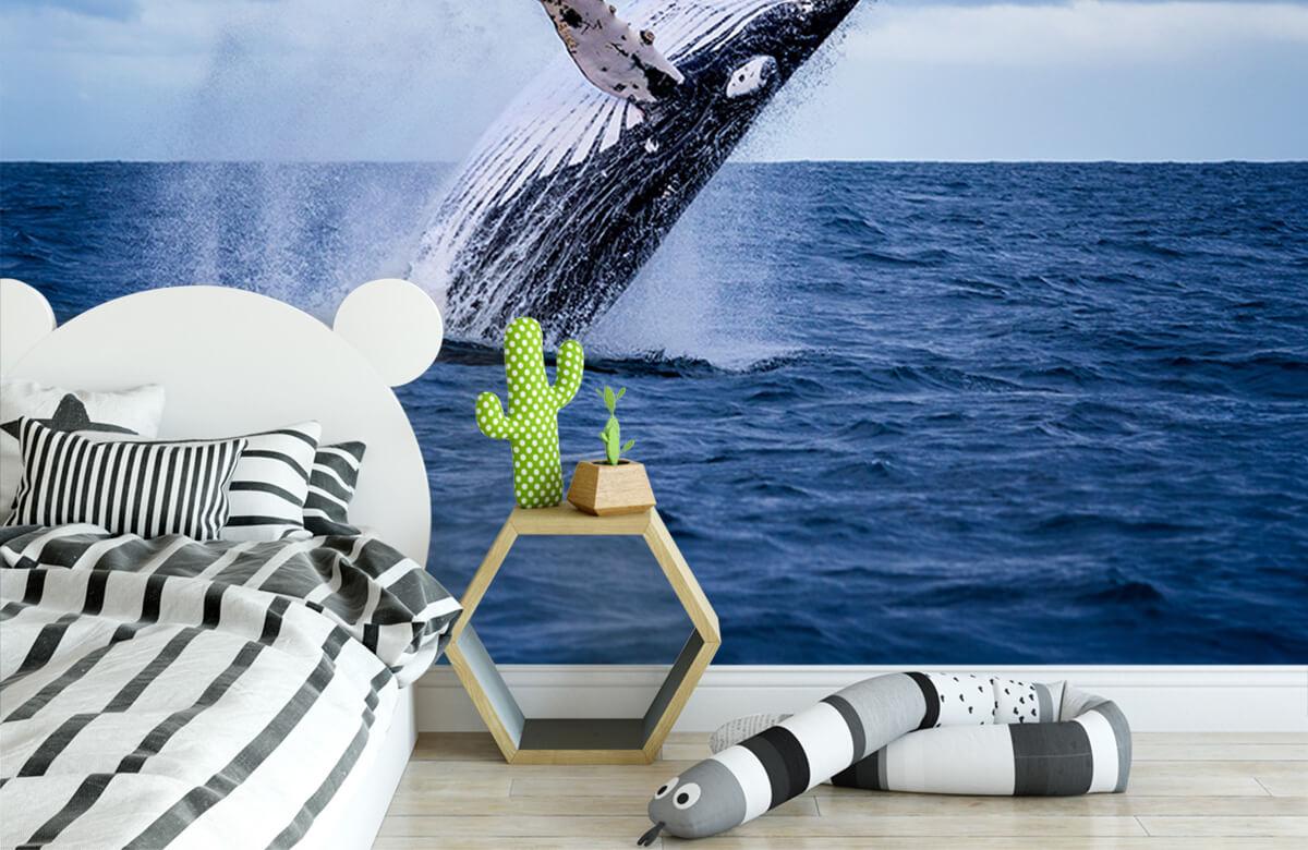 Zeedieren - Springende walvis - Tienerkamer 2