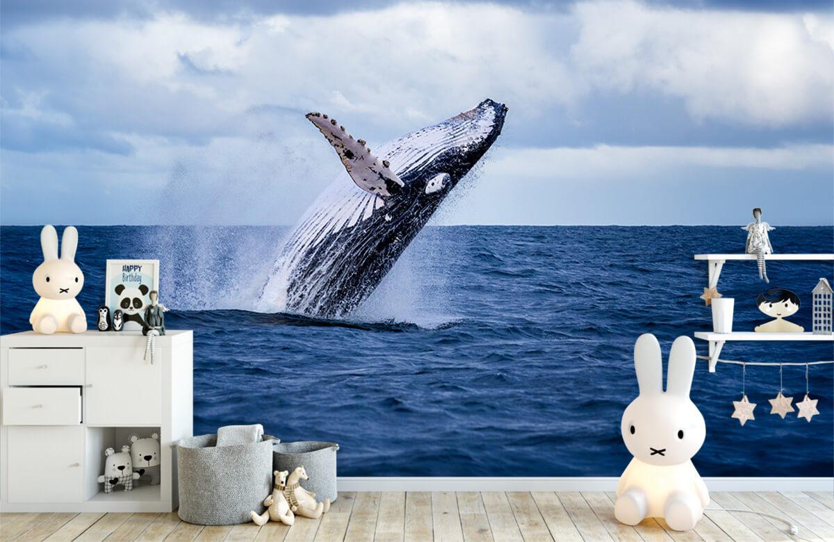 Zeedieren - Springende walvis - Tienerkamer 4
