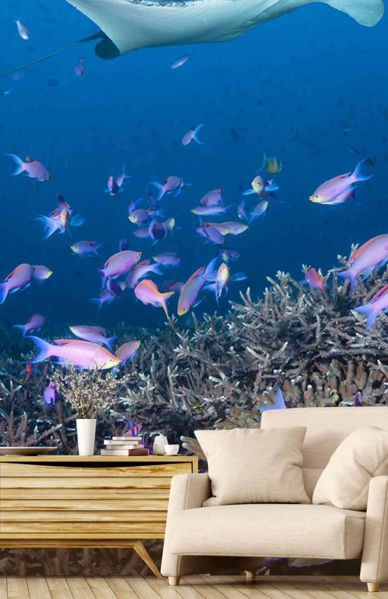 Dieren Pijlstaartrog tussen koraal 1