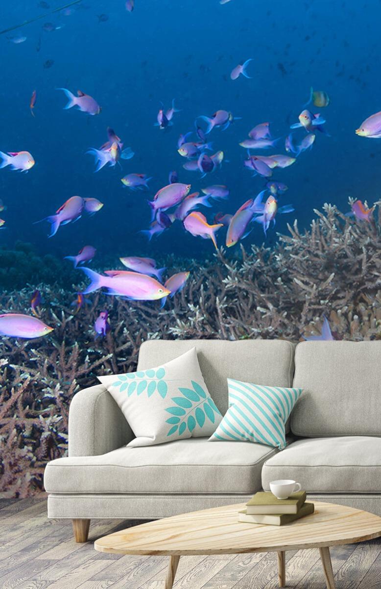 Dieren Pijlstaartrog tussen koraal 2