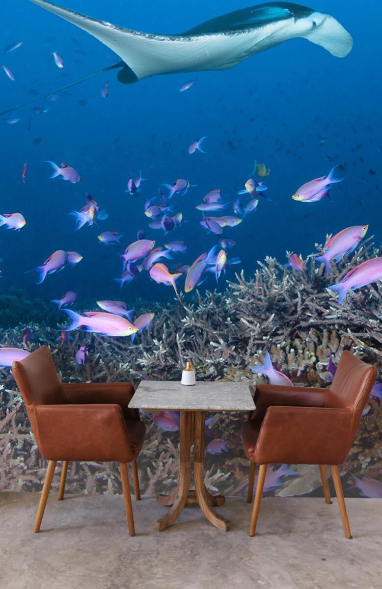 Dieren Pijlstaartrog tussen koraal 3