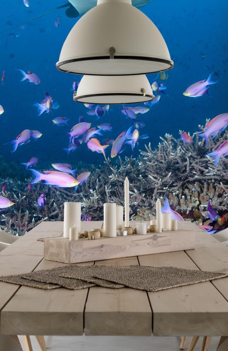 Dieren Pijlstaartrog tussen koraal 4