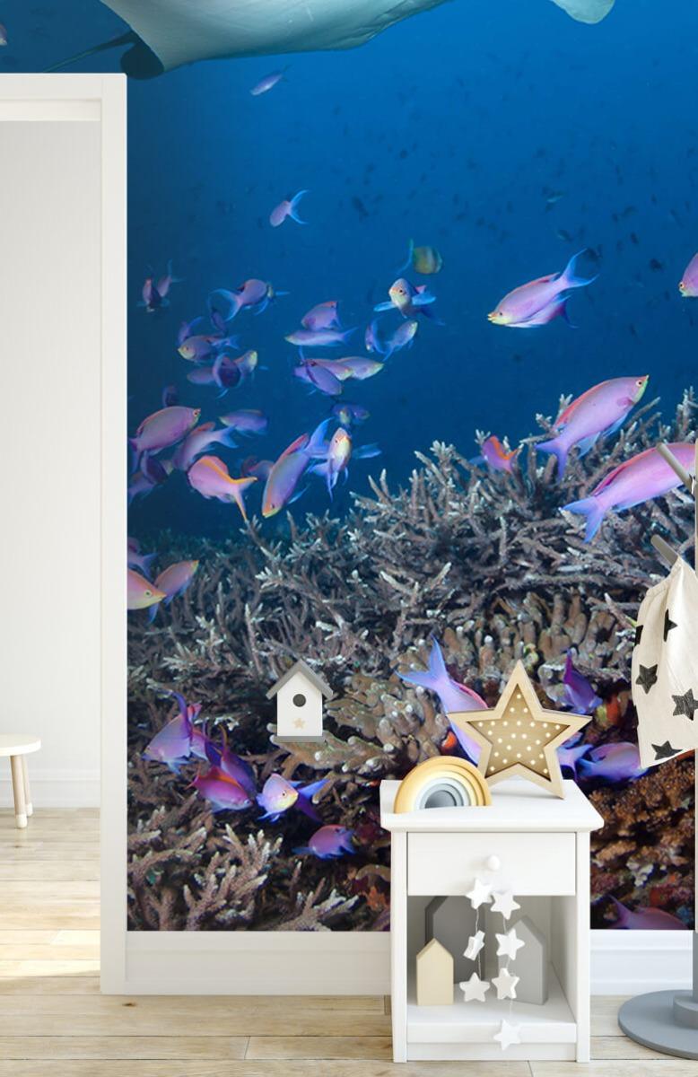 Dieren Pijlstaartrog tussen koraal 6