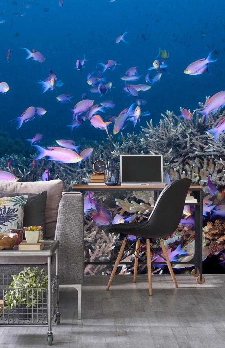 Dieren Pijlstaartrog tussen koraal 8