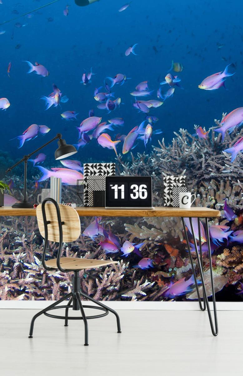 Dieren Pijlstaartrog tussen koraal 9