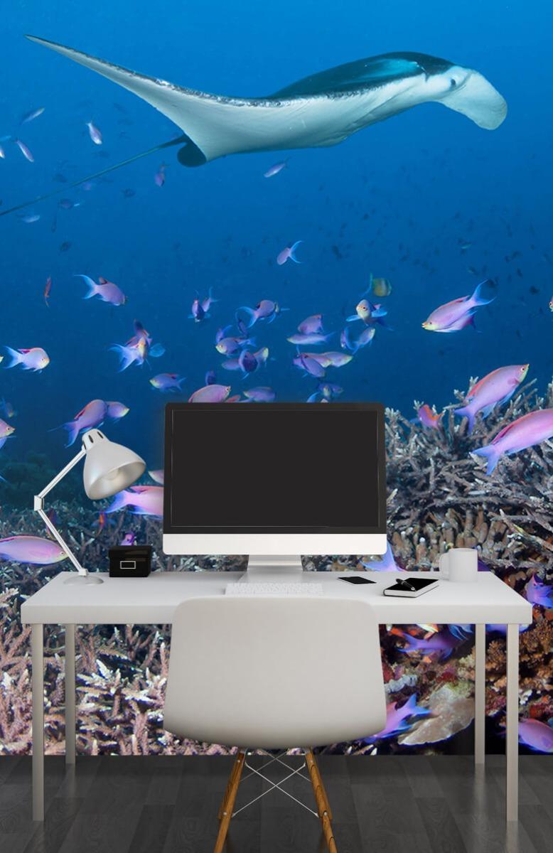 Dieren Pijlstaartrog tussen koraal 10