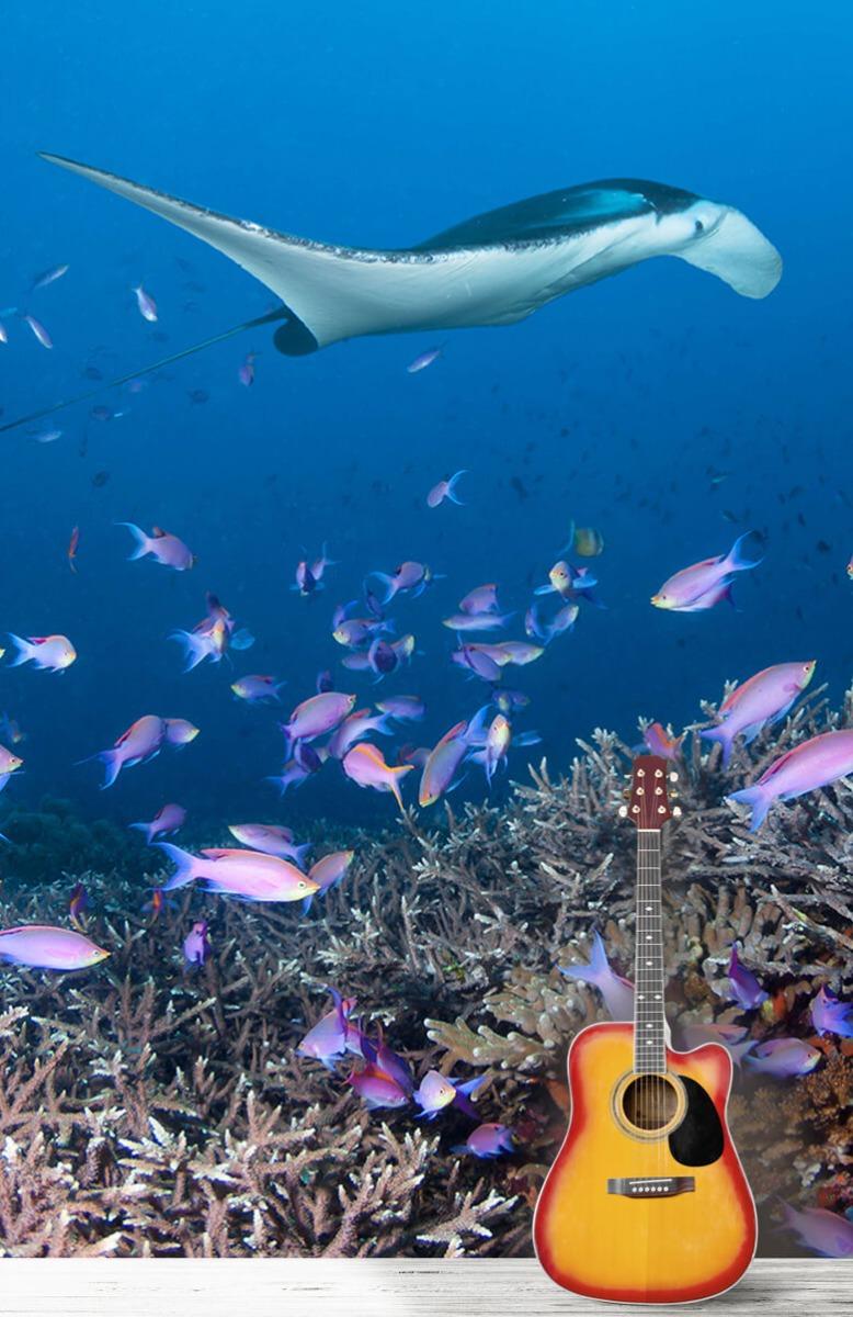 Dieren Pijlstaartrog tussen koraal 11