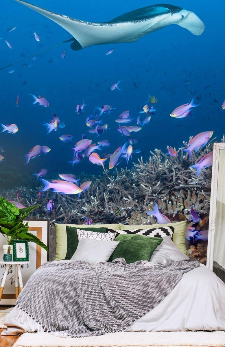 Dieren Pijlstaartrog tussen koraal 13