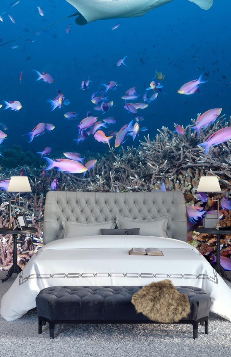 Dieren Pijlstaartrog tussen koraal 14
