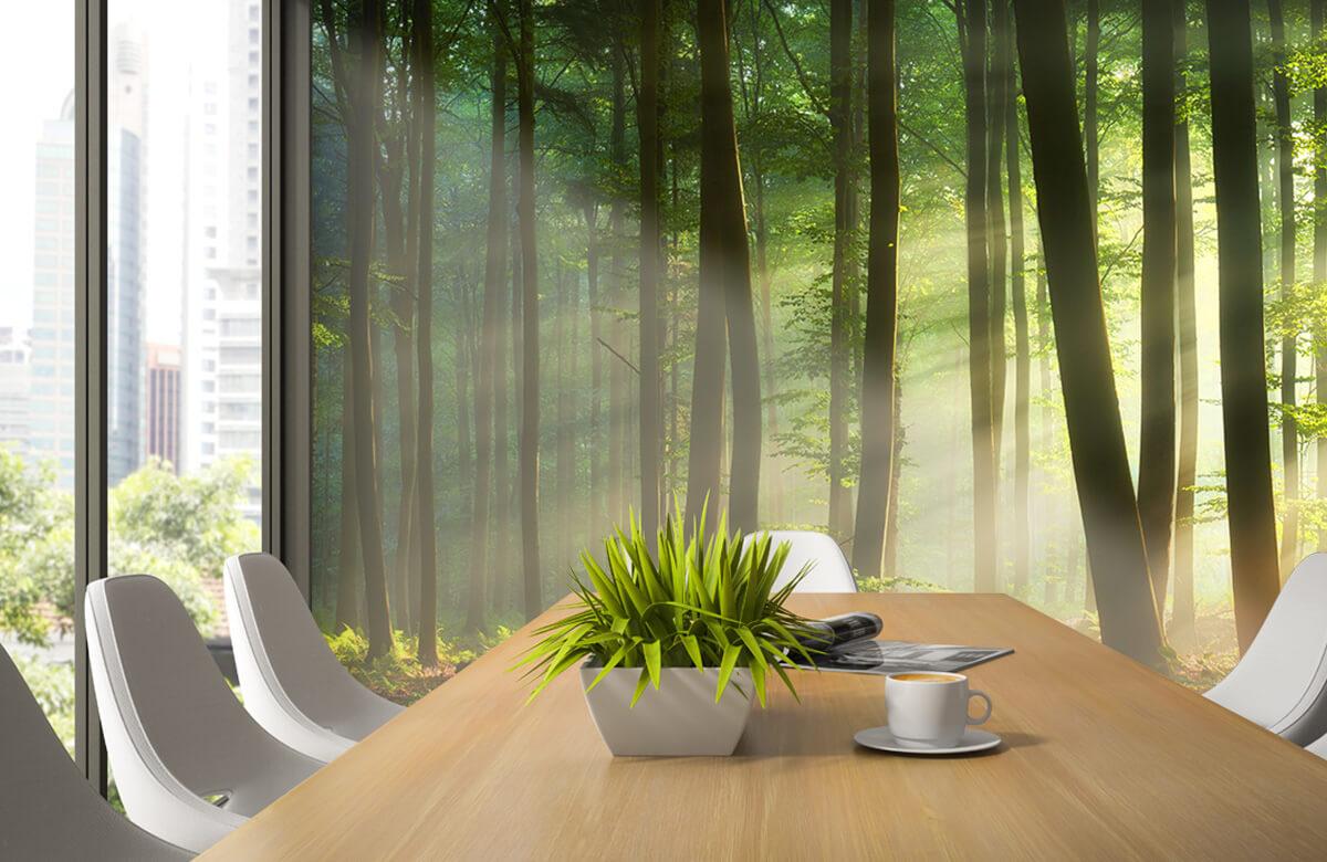 Bos behang - Ochtendzon tussen de bomen - Ontvangstruimte 3