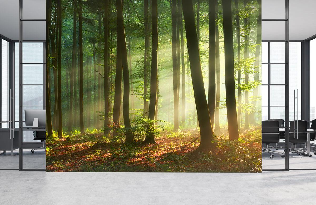Bos behang - Ochtendzon tussen de bomen - Ontvangstruimte 4