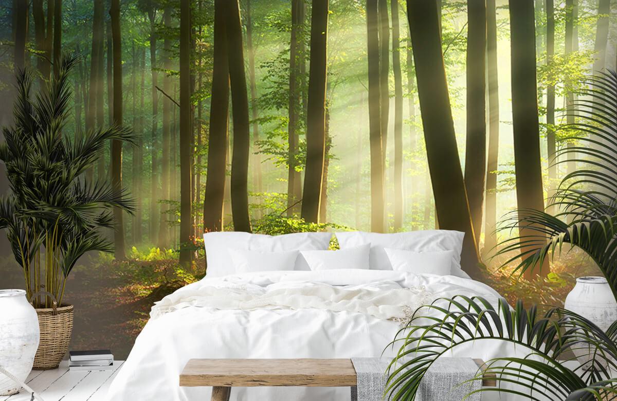 Bos behang - Ochtendzon tussen de bomen - Ontvangstruimte 1