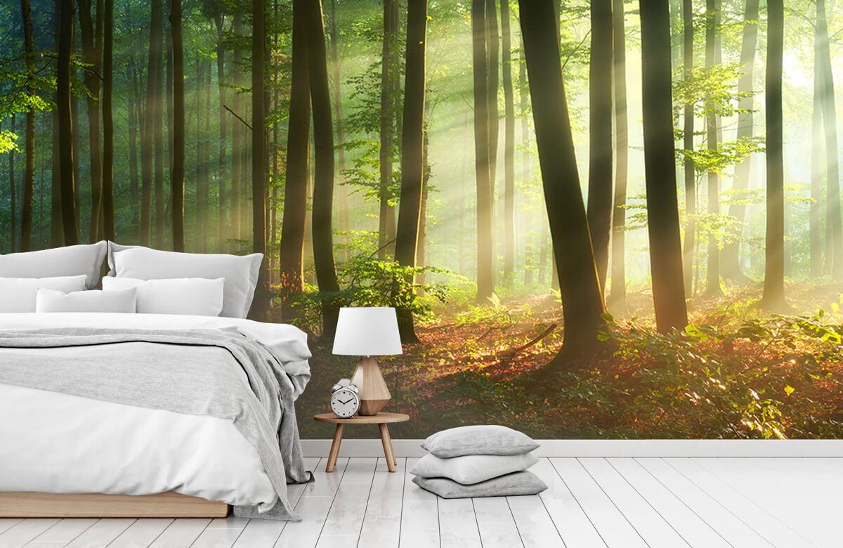 Bos behang - Ochtendzon tussen de bomen - Ontvangstruimte 7