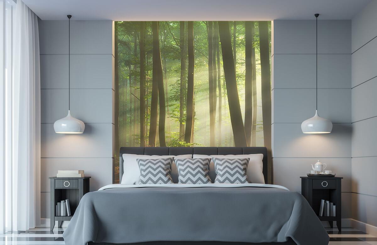 Bos behang - Ochtendzon tussen de bomen - Ontvangstruimte 8