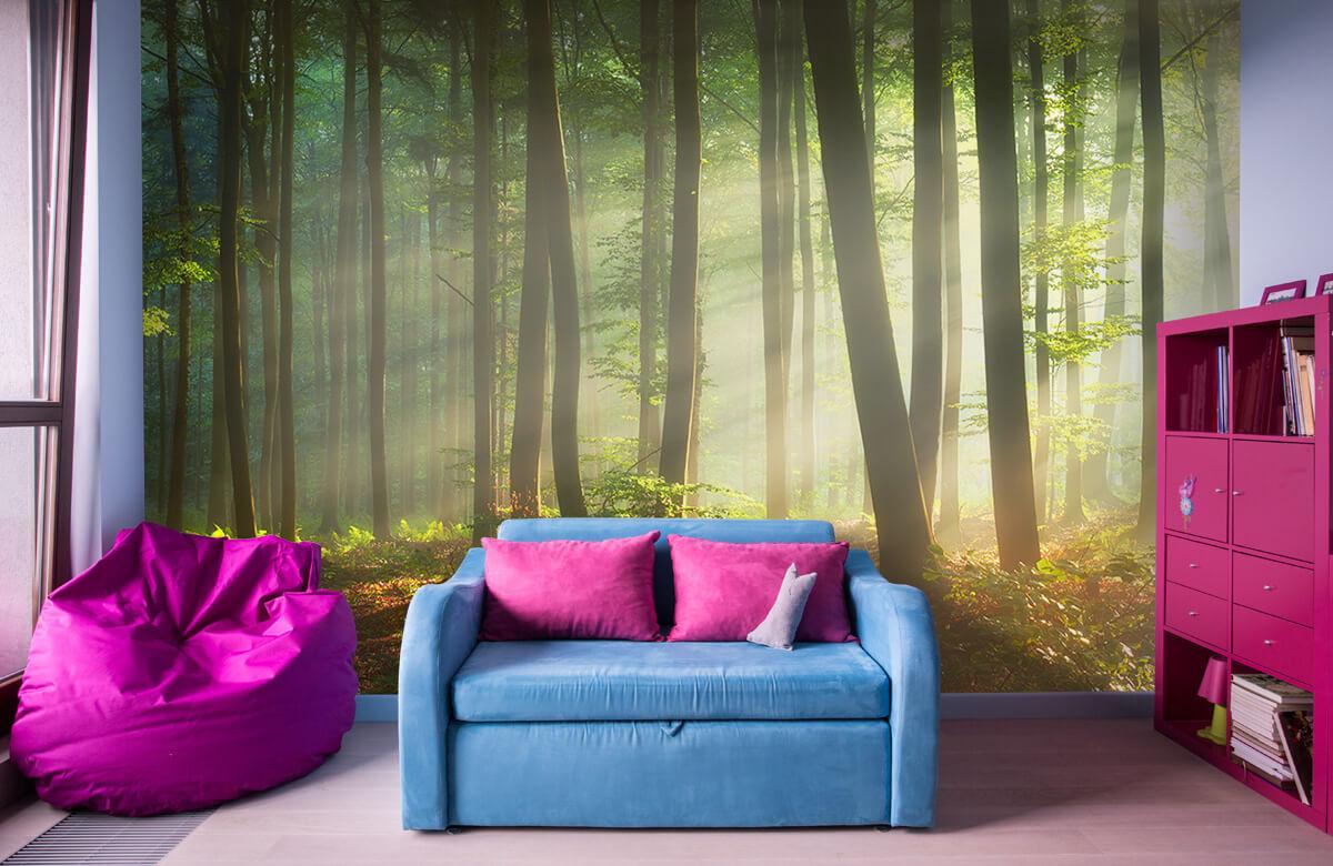 Bos behang - Ochtendzon tussen de bomen - Ontvangstruimte 10