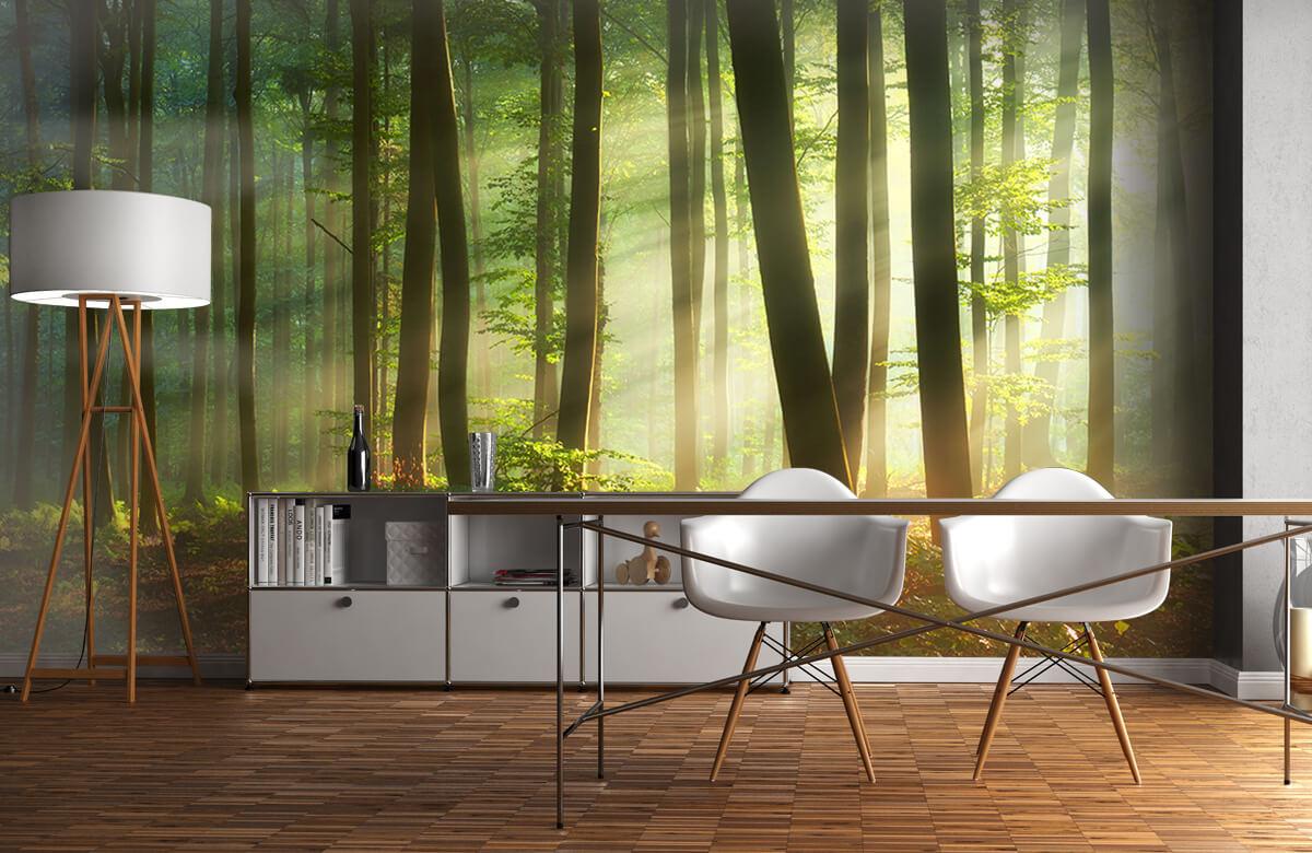 Bos behang - Ochtendzon tussen de bomen - Ontvangstruimte 11