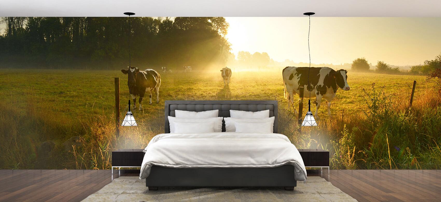 Dieren Koe tijdens zonsopkomst 1
