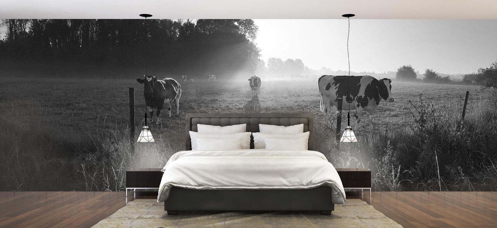 Dieren Koe tijdens zonsopkomst 2