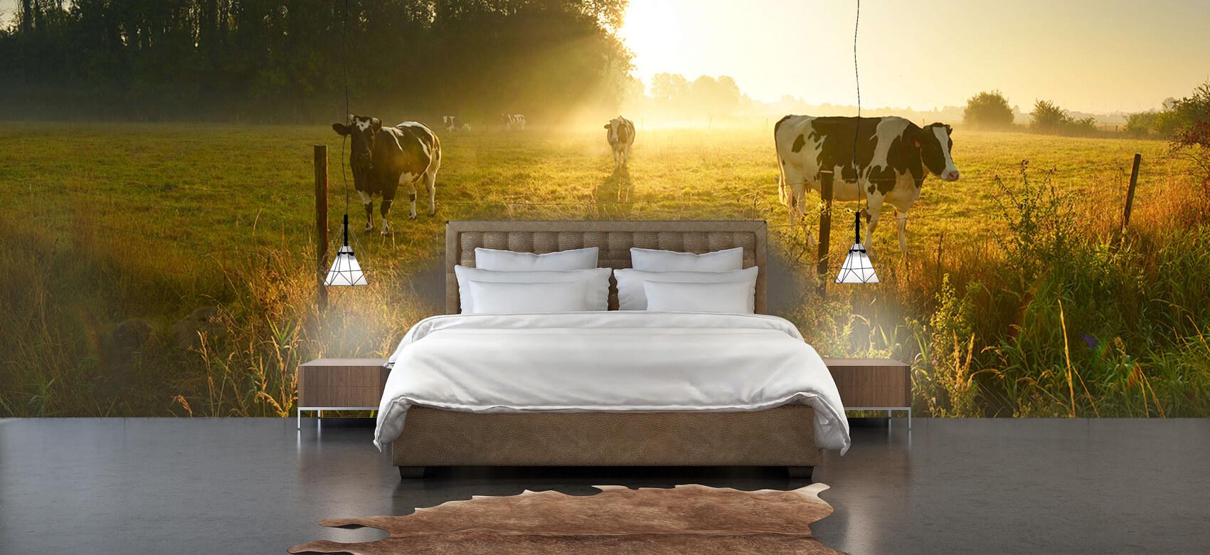 Dieren Koe tijdens zonsopkomst 3