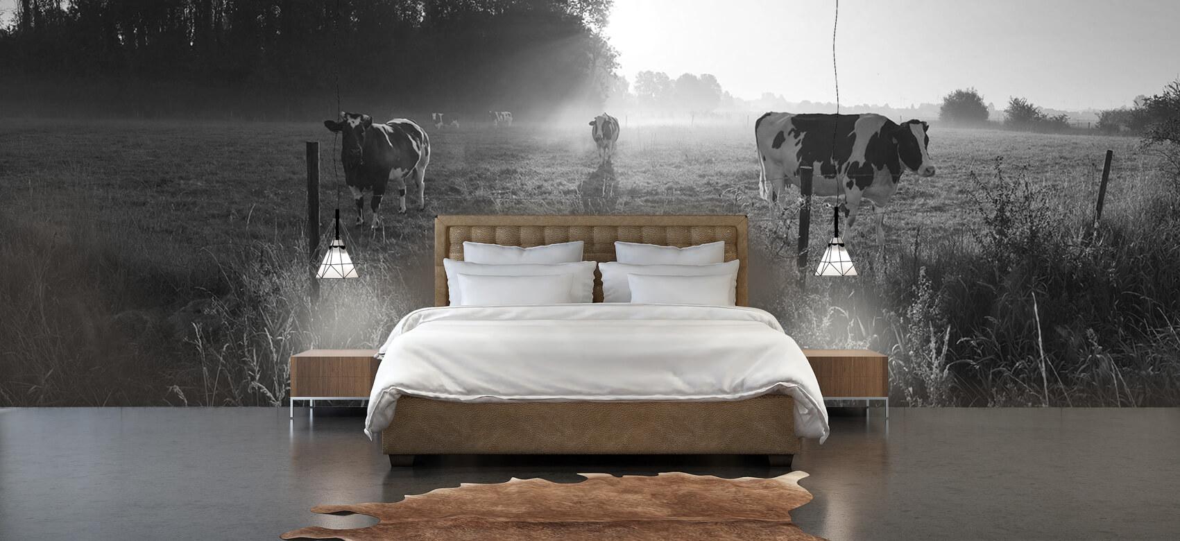 Dieren Koe tijdens zonsopkomst 4