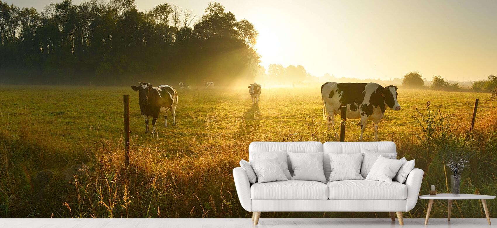 Dieren Koe tijdens zonsopkomst 5