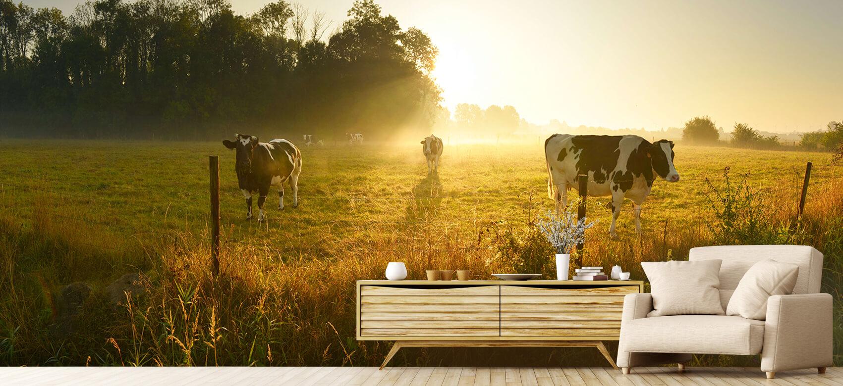 Dieren Koe tijdens zonsopkomst 6