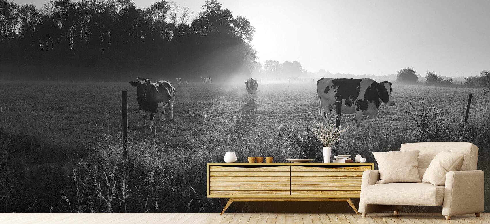 Dieren Koe tijdens zonsopkomst 7