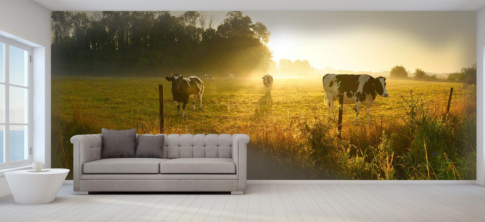 Dieren Koe tijdens zonsopkomst 8