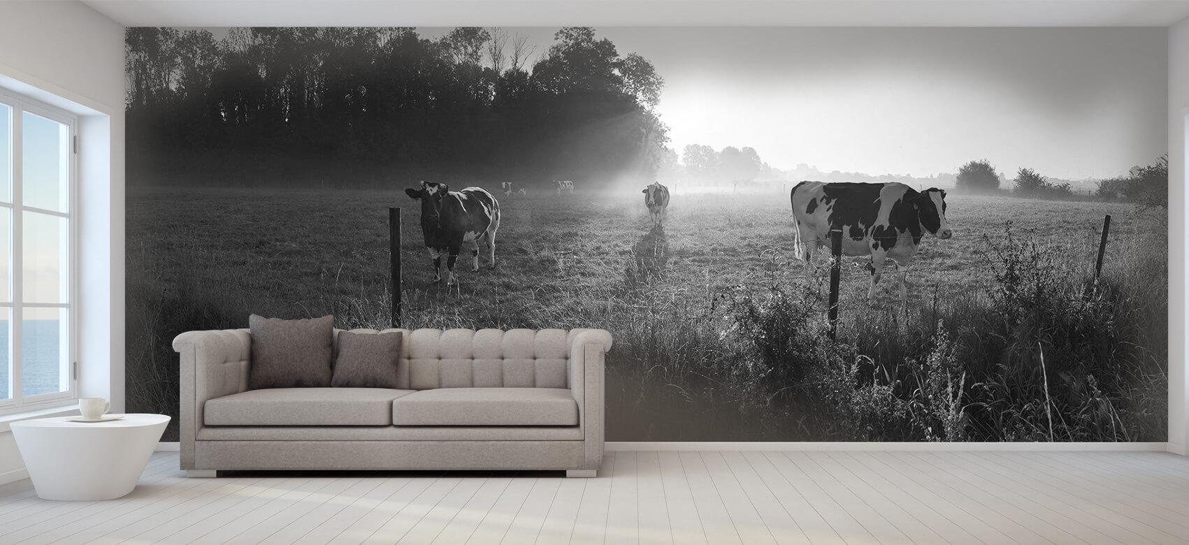 Dieren Koe tijdens zonsopkomst 9