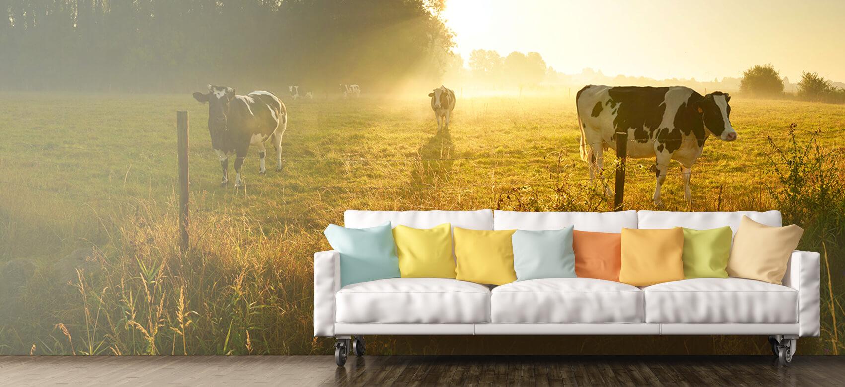 Dieren Koe tijdens zonsopkomst 10